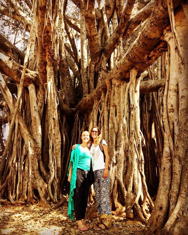 banyan_tree_mysore.jpg