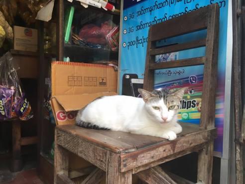 cat_Yangon_mehmehsasa.jpg